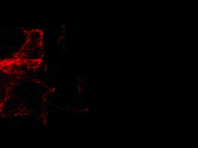 red077.jpg