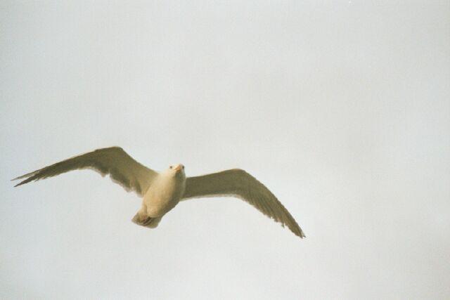 Rockaway Beach Seagull
